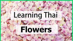 Learning Thai : Flowers