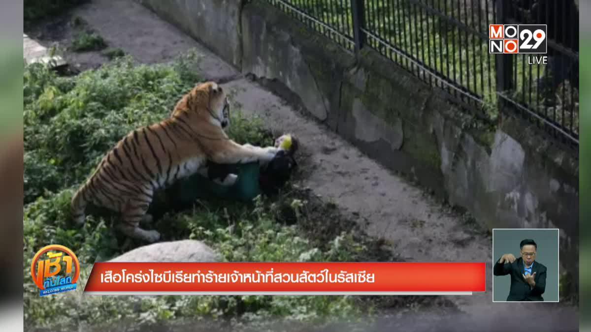 เสือโคร่งไซบีเรียทำร้ายเจ้าหน้าที่สวนสัตว์ในรัสเซีย