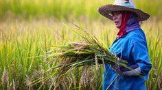 ครม. มีมติพักชำระหนี้ 3 ปี ลดดอกเบี้ย 3% เพื่อช่วยเหลือเกษตรกร
