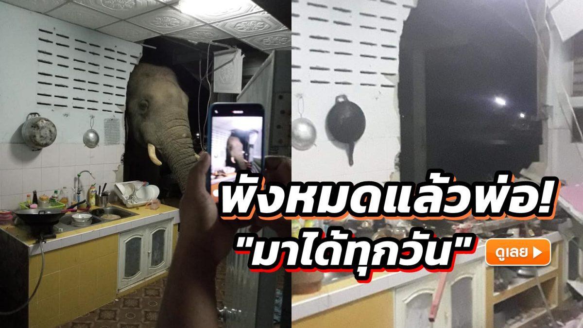 นาที ช้างป่าโผล่หัวพังทะลุห้องครัวชาวบ้าน หวังหาของกิน