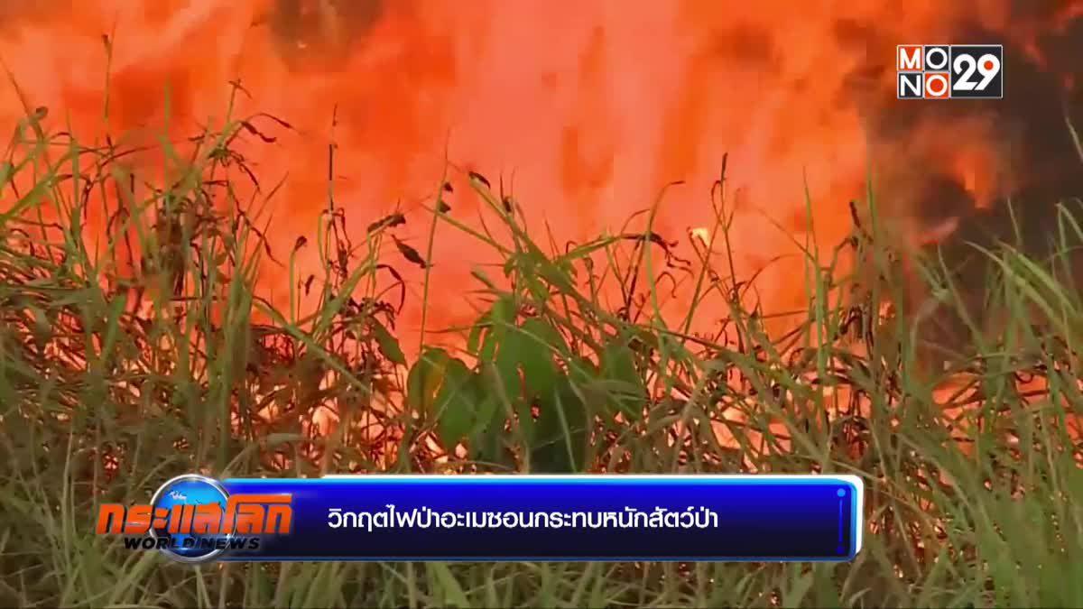 วิกฤตไฟป่าอะเมซอนกระทบหนักสัตว์ป่า