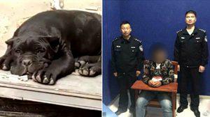 อยู่ดีไม่ว่าดี!! หนุ่มจีนงานเข้า เพราะดันไปตั้งชื่อ ลูกสุนัข ล้อเลียนเจ้าหน้าที่ตำรวจ