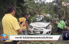 เคราะห์ดี ต้นไม้ล้มใส่รถยนต์แต่บาดเจ็บเล็กน้อย
