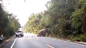 จ่อปิดถนนเส้น 3259 หวังคืนธรรมชาติให้สัตว์ป่า ขณะที่ช้างป่าถูกชน ทส. เร่งติดตาม