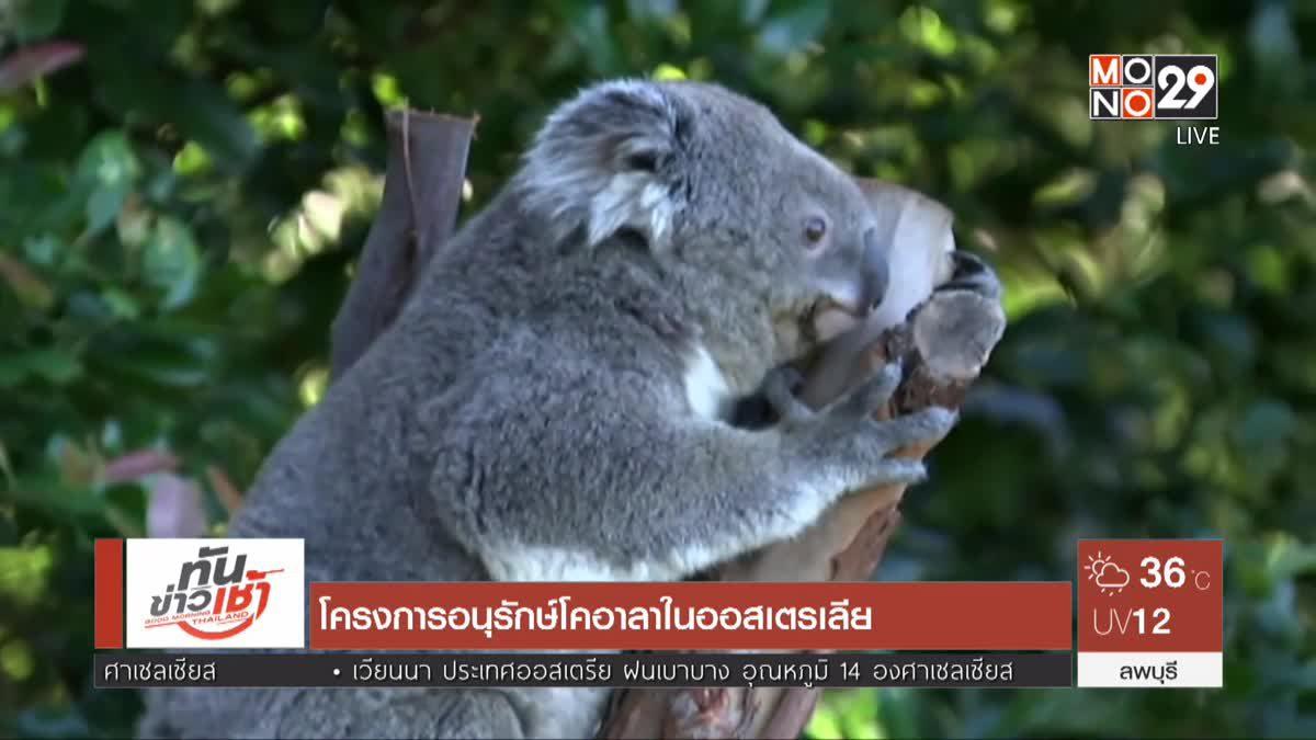 โครงการอนุรักษ์โคอาลาในออสเตรเลีย