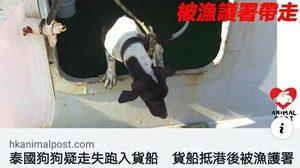 ทางการฮ่องกง ทำการุณยมาตน้องหมา หลังติดเรือสินค้าไปจากแหลมฉบัง