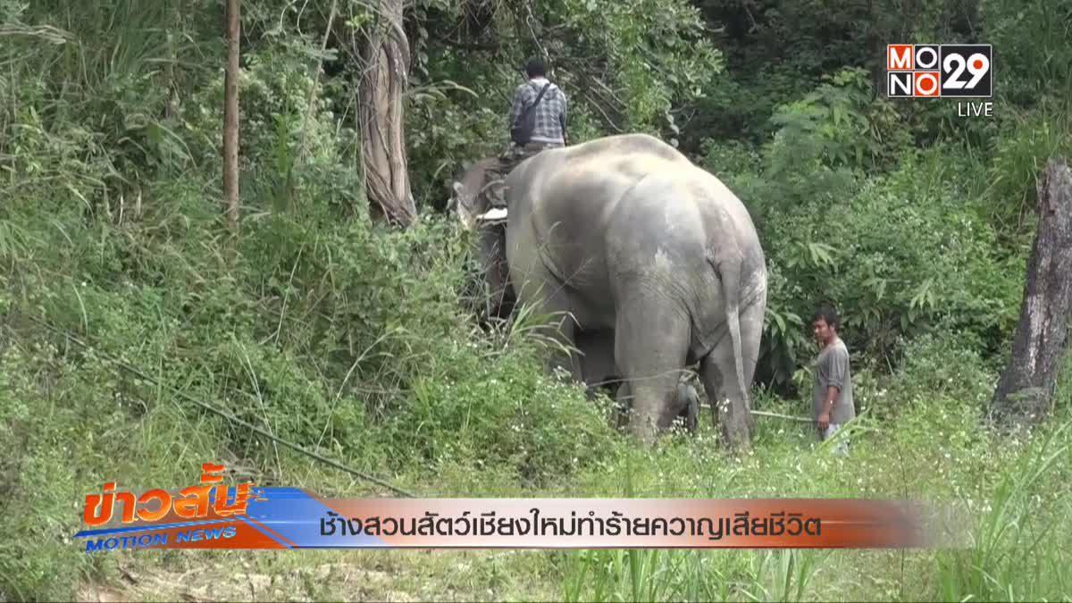 ช้างสวนสัตว์เชียงใหม่ทำร้ายควาญเสียชีวิต