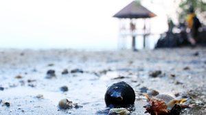 หาดทรายดำสุดมหัศจรรย์ อ.แหลมงอบ จ.ตราด