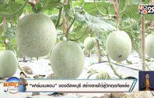 """""""ฟาร์มเมลอน"""" ของดีลพบุรี สร้างรายได้สู้วิกฤตภัยแล้ง"""