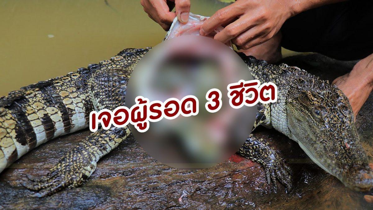 2 หนุ่ม มีตะลึง! เมื่อจับจระเข้ มาชำแหละแล้วเจอ 3 ผู้รอดชีวิตในท้อง ก่อนทำเมนูป่า