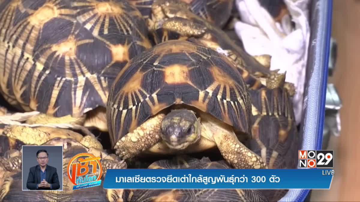 มาเลเซียตรวจยึดเต่าใกล้สูญพันธุ์กว่า 300 ตัว