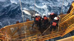 โซเชียลแห่แชร์ ! จนท.แท่นขุดเจาะ ระดมกำลังช่วยฉลามวาฬถูกเชือกรัดหาง
