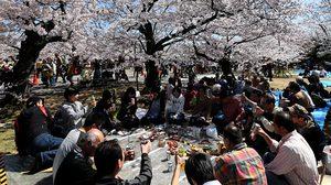 ดีเดย์วันนี้ ! ญี่ปุ่นเก็บภาษี 'ซาโยนาระ' หัวละ 1,000 เยน