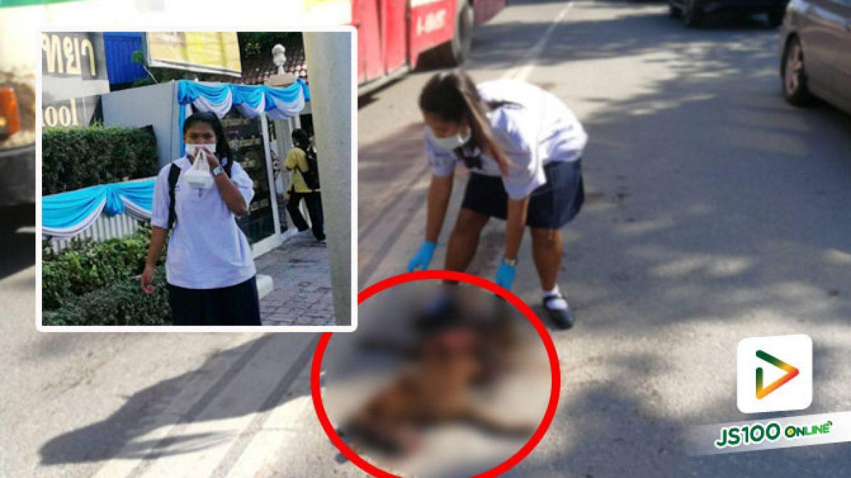 เด็กหญิงมีน้ำใจ ขอพ่อลงเก็บซากสุนัขถูกรถชนตายบนถนนก่อนเข้าเรียน ทนมองเห็นรถทับไม่ไหว
