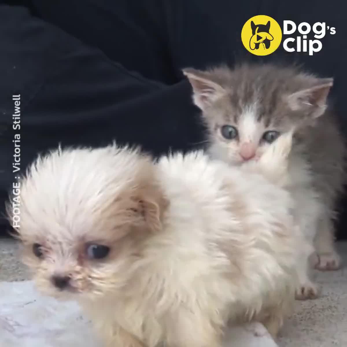 คู่เพื่อนซี้น้องหมา - แมวที่น่ารักที่สุด ในศูนย์พักพิงสัตว์