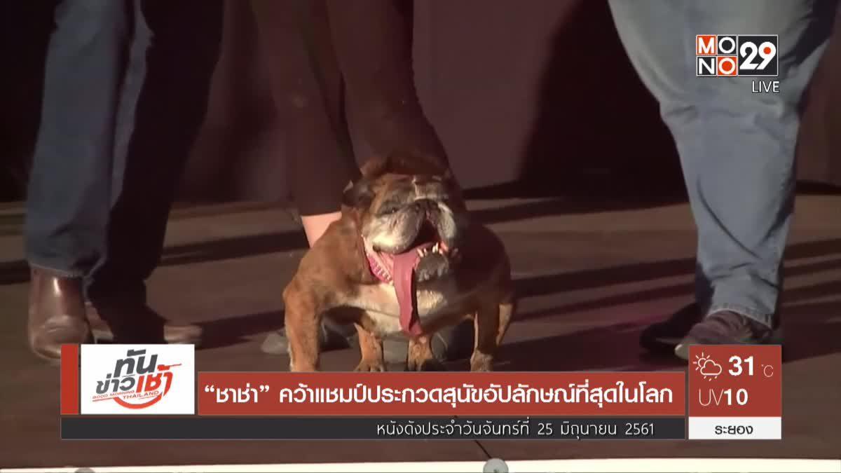 """""""ชาช่า"""" คว้าแชมป์ประกวดสุนัขอัปลักษณ์ที่สุดในโลก"""