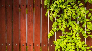 12 ไอเดีย แนวรั้วต้นไม้ เสริมความเป็นส่วนตัวให้กับบ้านและสวน