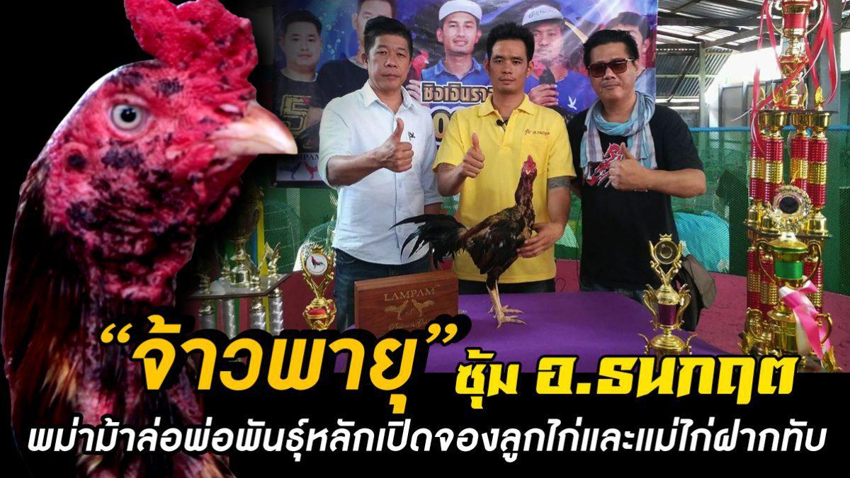 """ซุ้ม อ.ธนกฤต เปิดจองลูกไก่""""จ้าวพายุ"""" พม่าม้าล่อแชมป์ 2,200,000 บาท"""