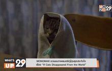 """MONOMAX ชวนชมภาพยนตร์ญี่ปุ่นสุดประทับใจเรื่อง """"If Cats Disappeared From the World"""""""