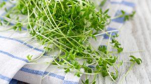 วอเตอร์เครส ราชินีผักเพื่อสุขภาพ มีสารอนุมูลอิสระสูง ต้านโรคมะเร็ง!!