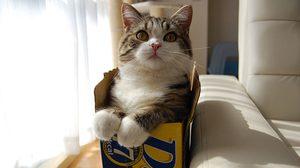 มารุ แมวกล่อง mugumogu แมวดังแดนปลาดิบ