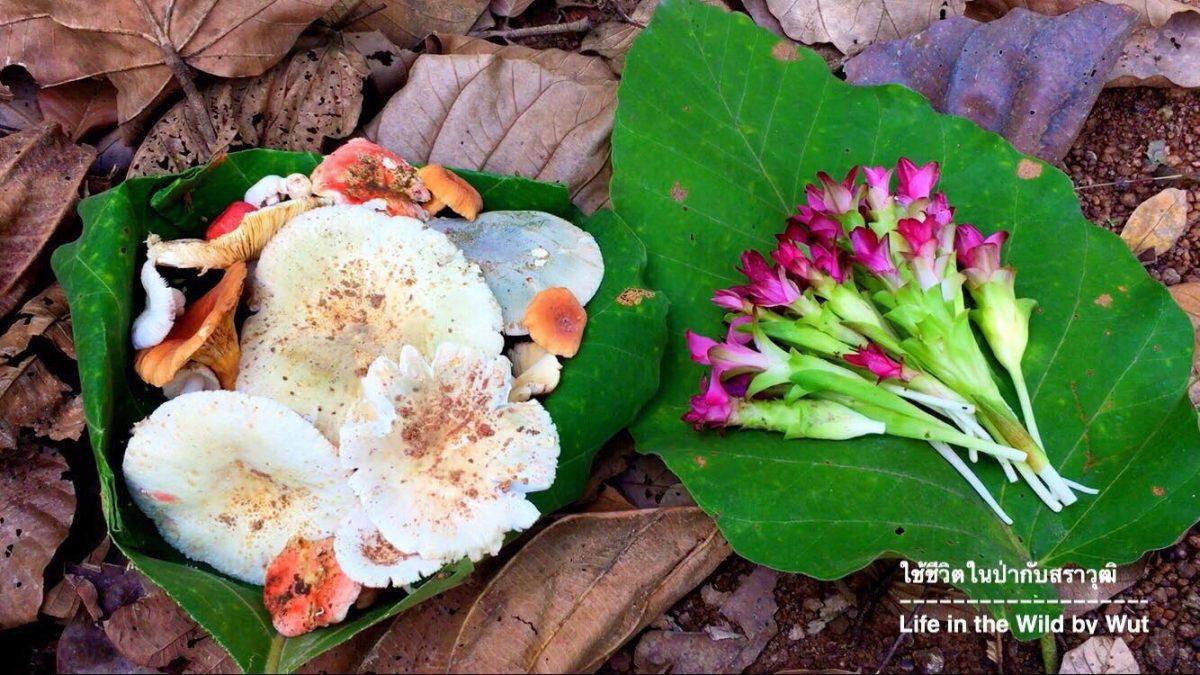 ใช้ชีวิตในป่ากับสราวุฒิ : เก็ดเห็ดโคน และดอกกระเจียว (Termite mushroom hunting)