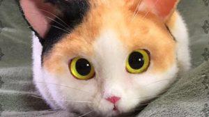 แมวกระเป๋า เหมือนเกิ๊นจนนึกว่าแมวตัวเป็นๆ