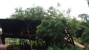 พายุกระหน่ำชัยภูมิ ต้นไม้ล้มทับบ้านประชาชน พังยับ 20 หลัง