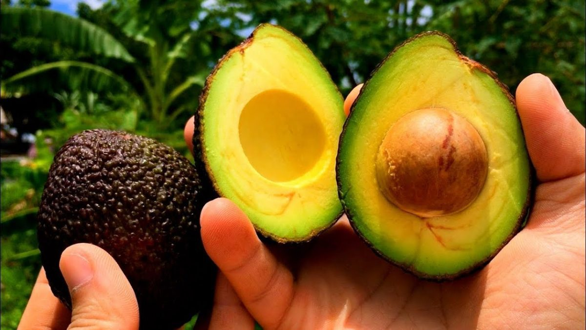 วิธีปลูกอะโวคาโด / How to Grow an Avocado Tree