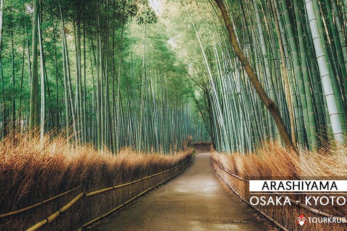 ป่าไผ่ - Bamboo Groves, อาราชิย่าม่า - Arashiyama