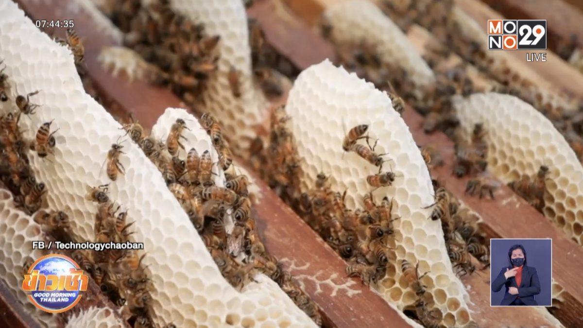 ประชากรผึ้งหายจากโลก 90%
