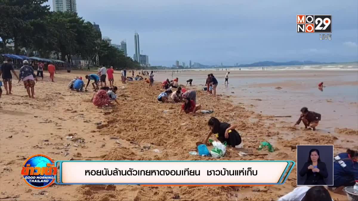 หอยนับล้านตัวเกยหาดจอมเทียน  ชาวบ้านแห่เก็บ