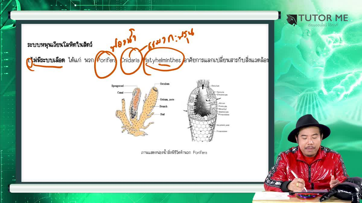 EP 11 Circulartory system and Immunity 1