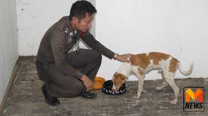ชื่นชม! ตร.เมืองกรุงเก่า ช่วยหมาถูกรถชนรักษาจนรอด