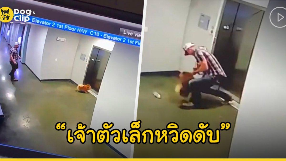 นาทีระทึก! สายจูงเกือบรัดคอน้องหมา หลังเจ้านายขึ้นลิฟต์โดยไม่ทันมองว่าน้องหมาไมไ่ด้เข้าไปด้วย