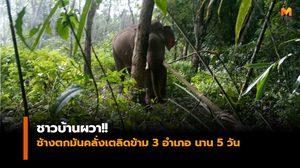 ชาวบ้านผวา!! ช้างตกมันคลั่งเตลิดข้าม 3 อำเภอ นาน 5 วัน