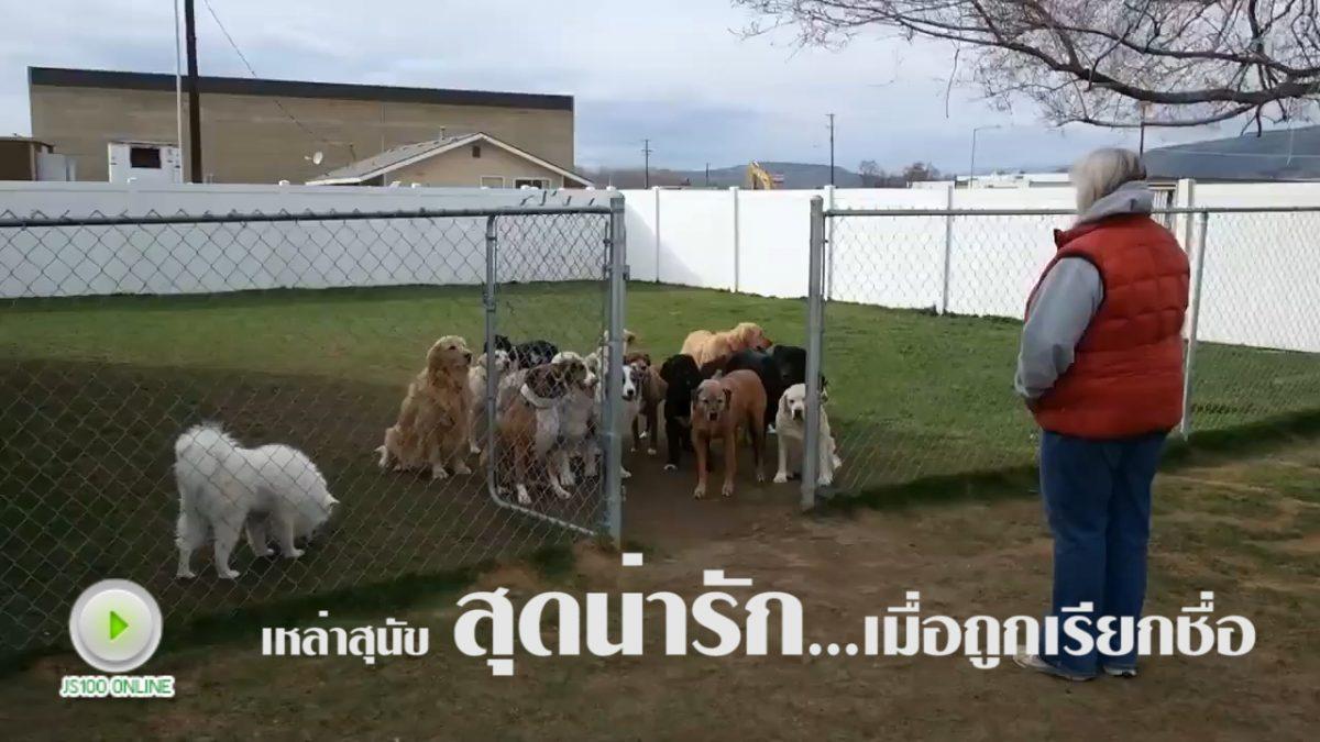 ดูให้จบคลิป...เมื่อเหล่าสุนัขถูกเรียกชื่อ (23-01-61)