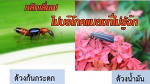 เตือนภัย! อันตรายจากแมลงมีพิษ พิษร้ายแรงอาจทำเราถึงตายได้