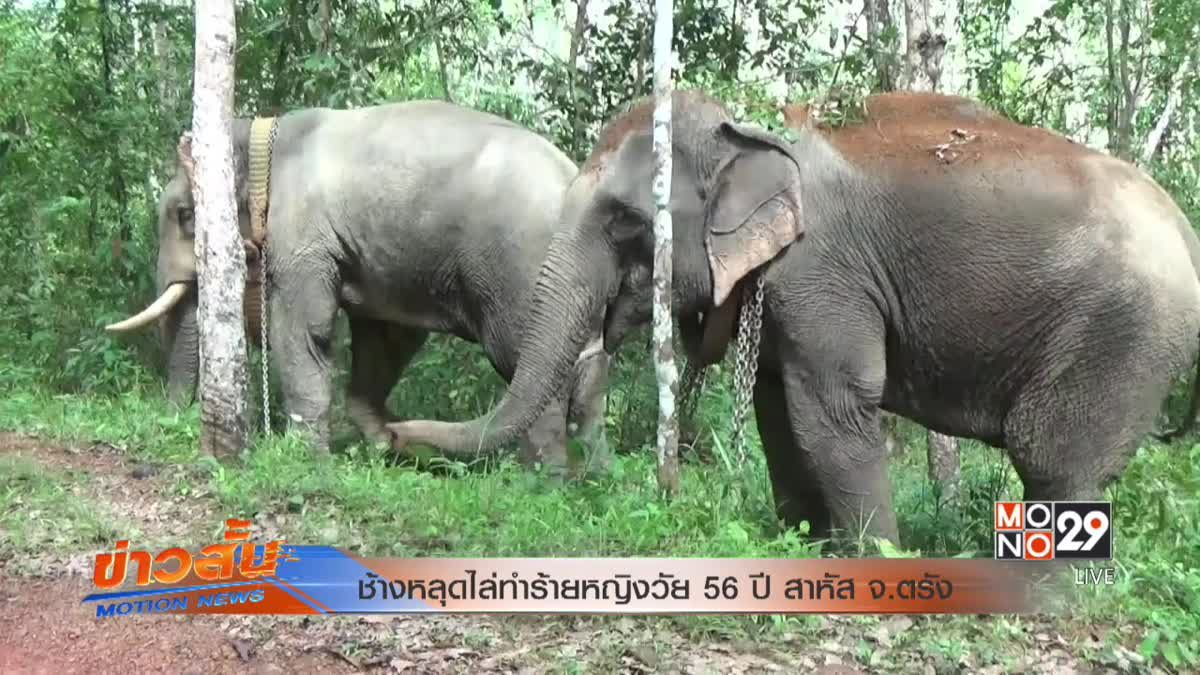 ช้างหลุดไล่ทำร้ายหญิงวัย 56 ปี สาหัส จ.ตรัง