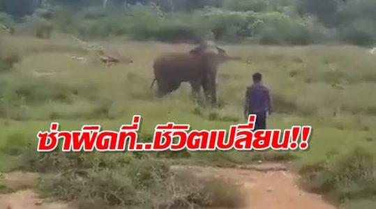 อุทาหรณ์สายห้าว! หนุ่มเมาเข้าไปซ่ากับช้าง ไม่ทันไรรู้เรื่อง จำกันไปถึงตาย