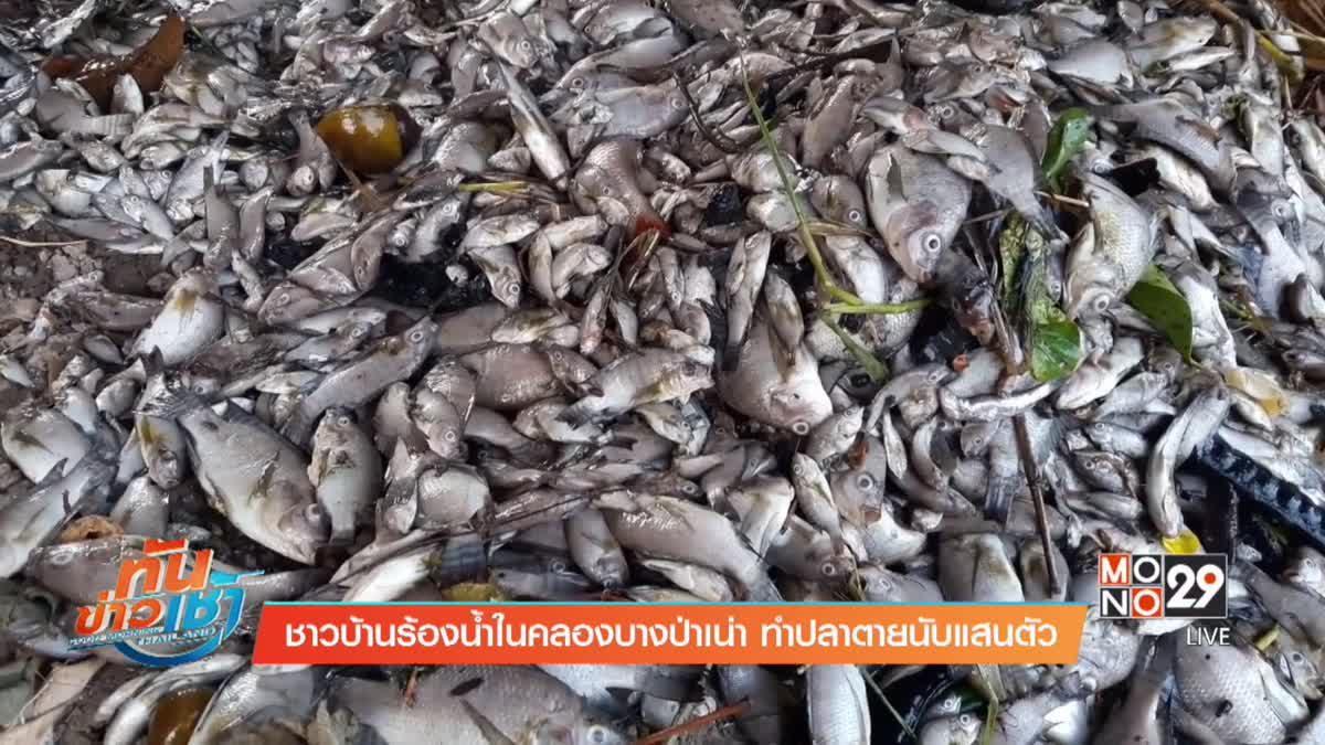 ชาวบ้านร้องน้ำในคลองบางป่าเน่า ทำปลาตายนับแสนตัว