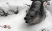 สัตว์ในสวนสัตว์โอเรกอนเล่นหิมะ