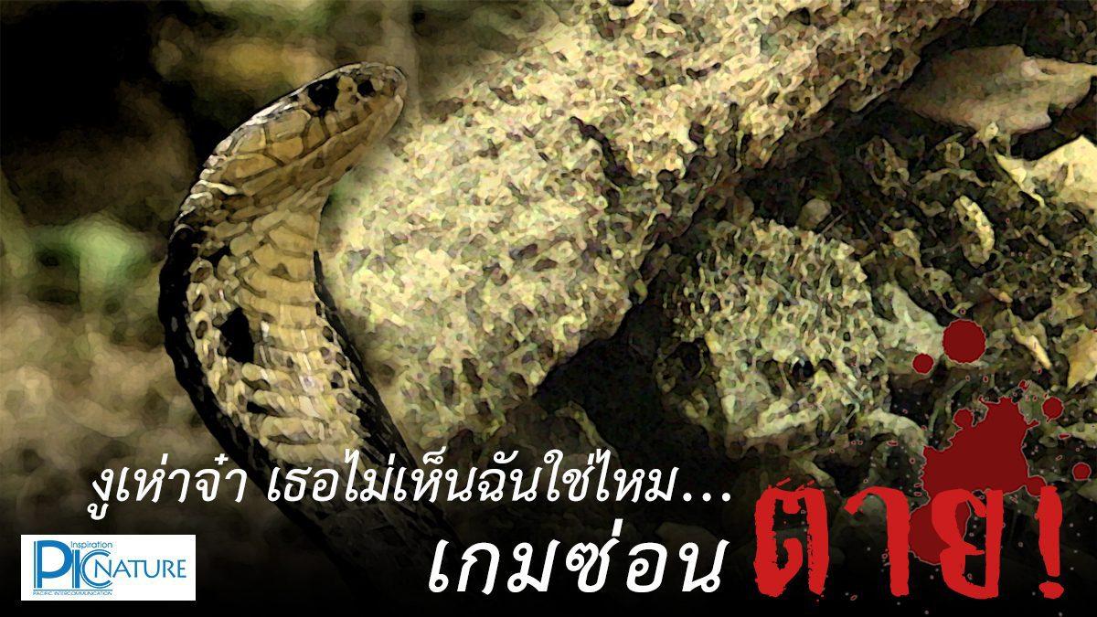 งูเห่าจ๋า เธอไม่เห็นฉันใช่ไหม...เกมซ่อนตาย!