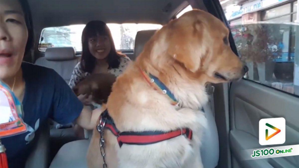 คลิปน้องหมาแสนรู้ โดนหลอกมาฉีดยานั่งงอลเจ้าของ (08-05-61)