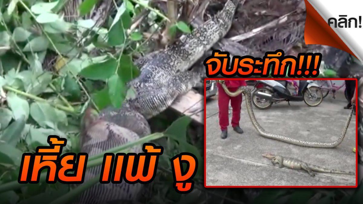 (คลิปเด่นทั่วไทย) จับงูเหลือมขนาดใหญ่ บุกบ้าน กินตัวเหี้ยโหด!!