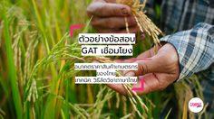 บทความเรื่อง อนาคตราคาสินค้าเกษตรของไทย – เทคนิค GAT เชื่อมโยง