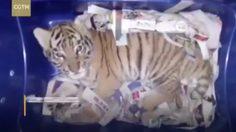 """ไร้ความปรานี !จับ """"ลูกเสือ"""" มอมยายัดกล่องส่งไปรษณีย์"""