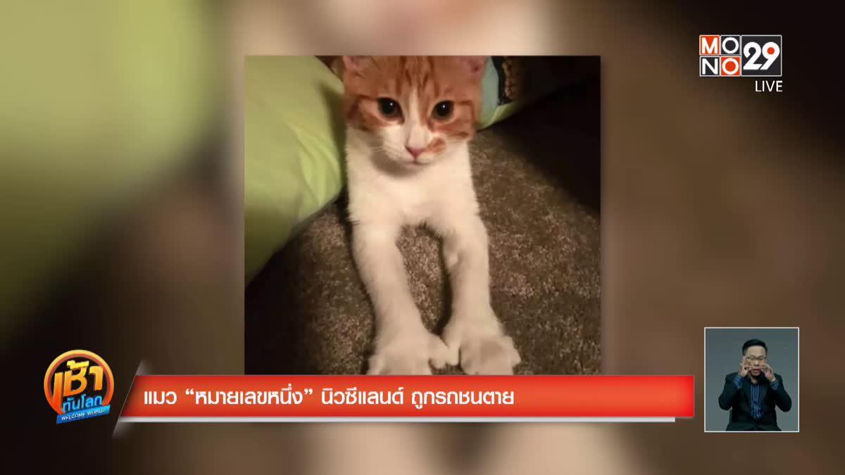 """แมว """"หมายเลขหนึ่ง"""" นิวซีแลนด์ ถูกรถชนตาย"""