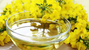 6 ประโยชน์ของน้ำมันคาโนลา สายเฮลตี้ไม่ควรพลาด ทานแล้วไม่อ้วน!!