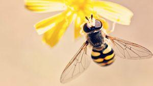 30 เรื่องน่ารู้ เกี่ยวกับแมลง - บางเรื่องก็น่าทึ่งมาก